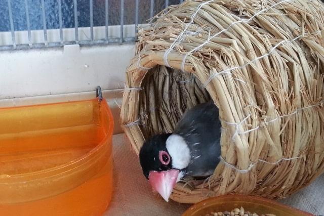 飼い鳥の感染症